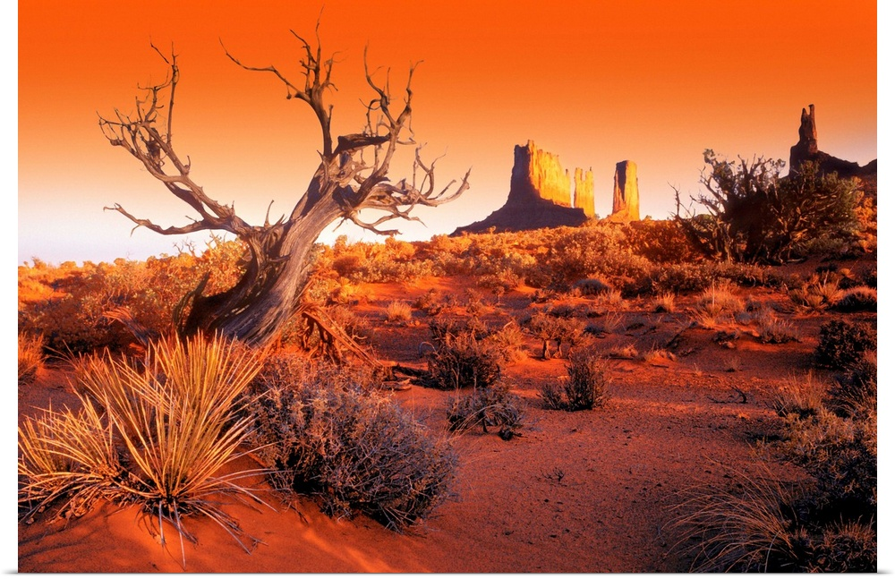 Poster Print Wall Art entitled Dead Tree In Desert Monument Valley, United
