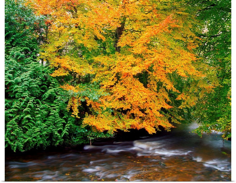 Poster Print Wall Art entitled River Camcor In The Fall, County Offaly, Ireland