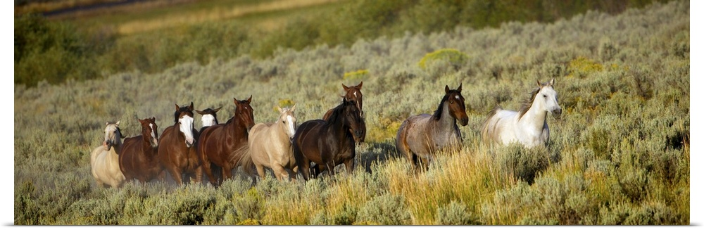 Poster Print Wall Art entitled Wild Horses