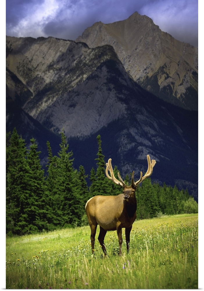 Poster Print Wall Art entitled Wildlife In The Mountains