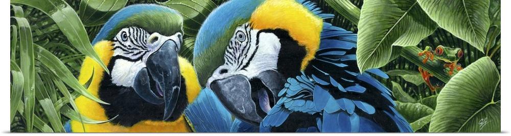 Poster Print Wall Art entitled Blau and Gelb Macaws
