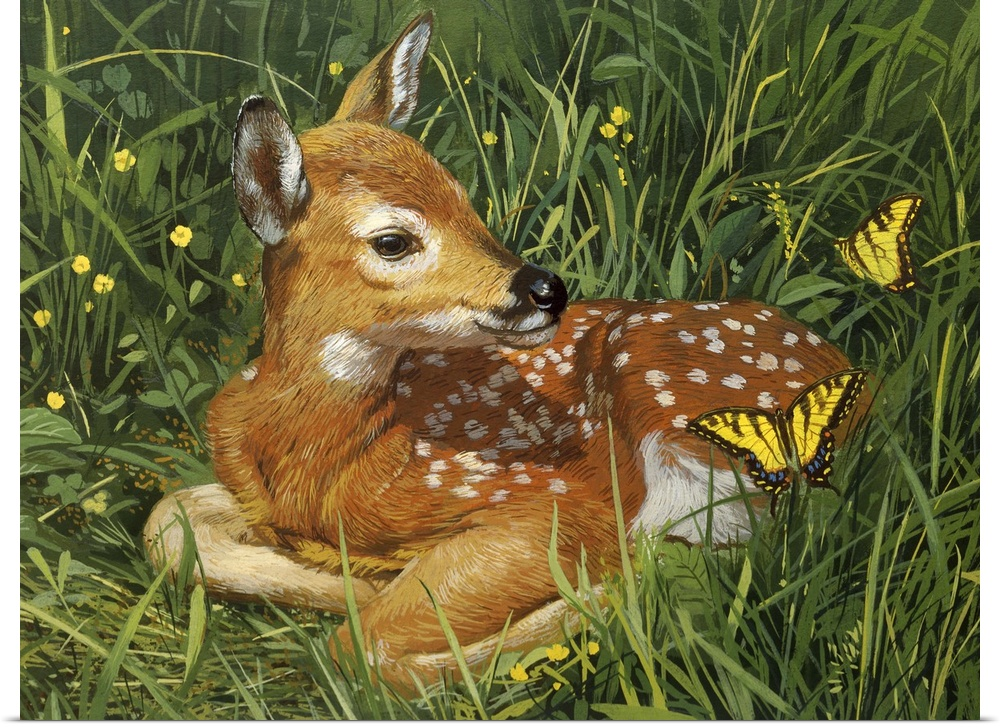 Poster Print Wall Art entitled Fawn
