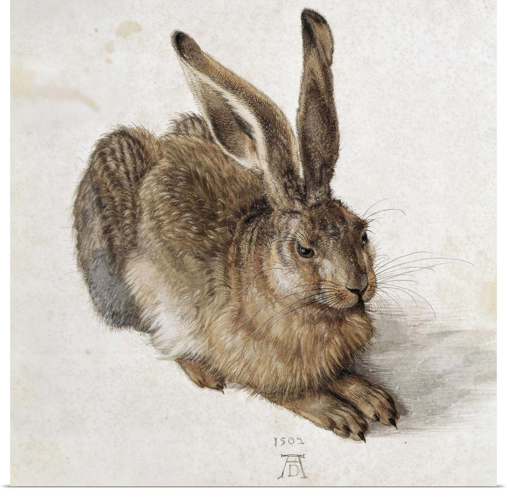 Poster Drucken  Hare