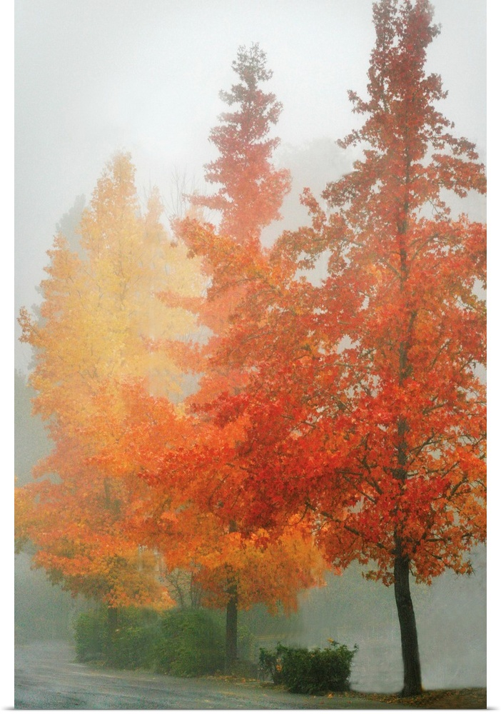 Poster Print Wall Art entitled Farbes in the Mist I
