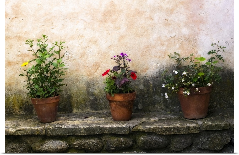 Poster Print Wall Art entitled Flowers on a Wall