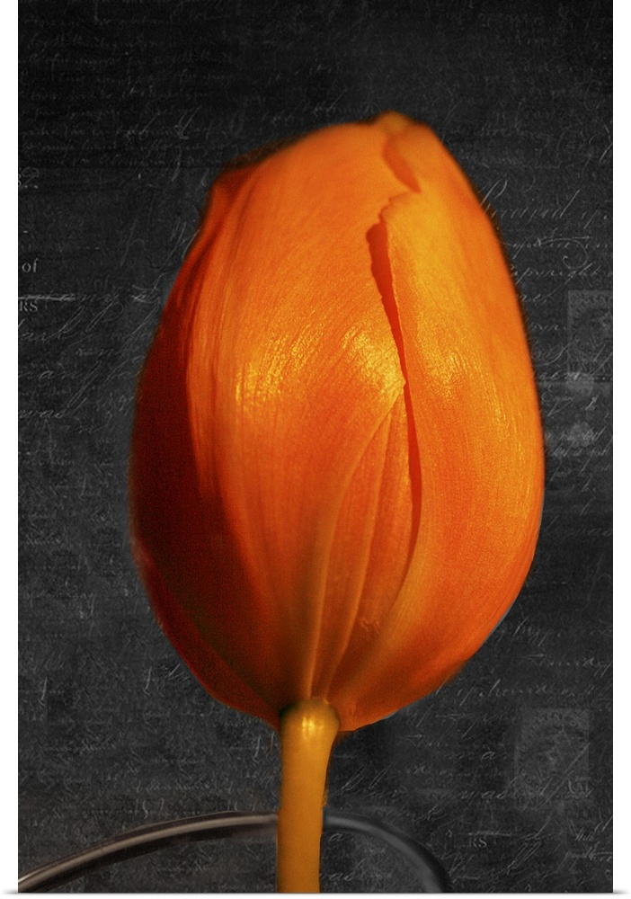 Poster Print Wall Art entitled Tulip Letter II