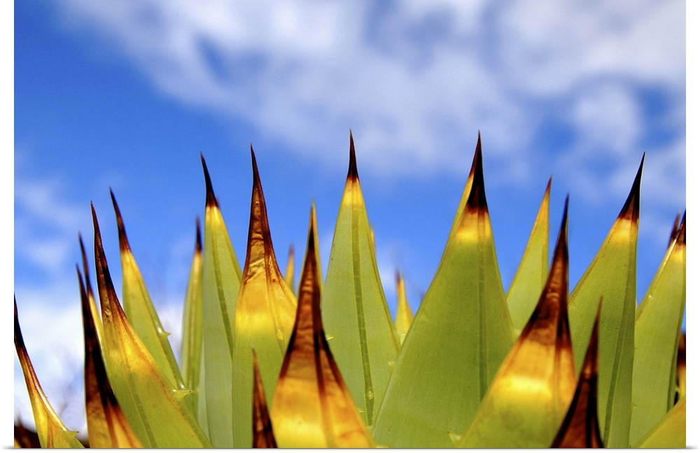 Poster Print Wall Art entitled Cactus seen from the side in front of blu sky