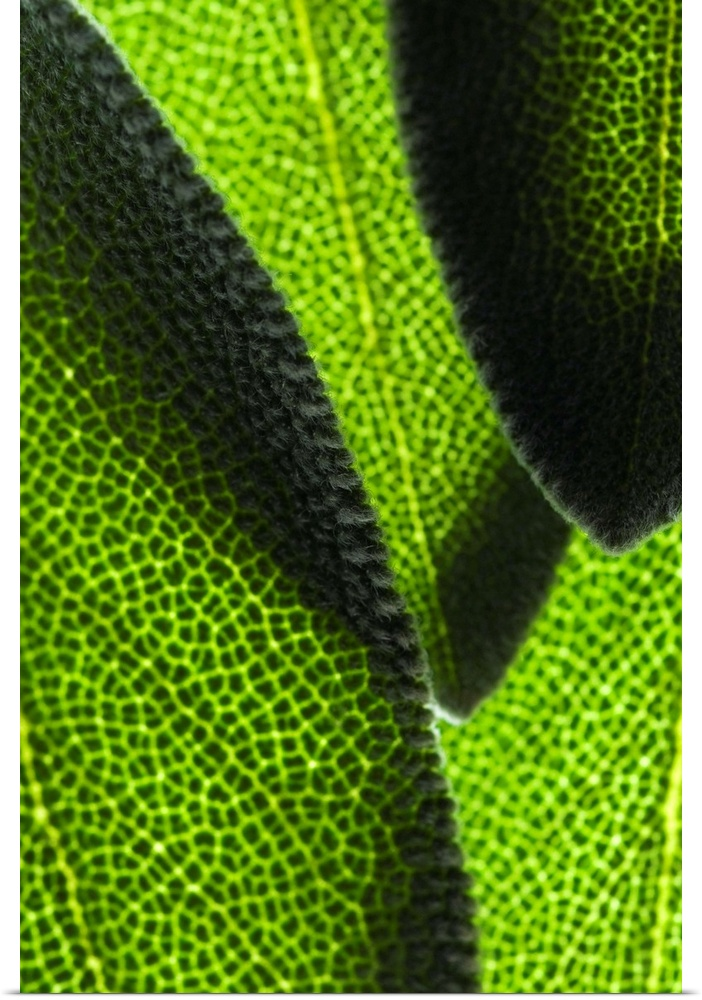 Poster Print Wall Art entitled Close-up of verde leaves