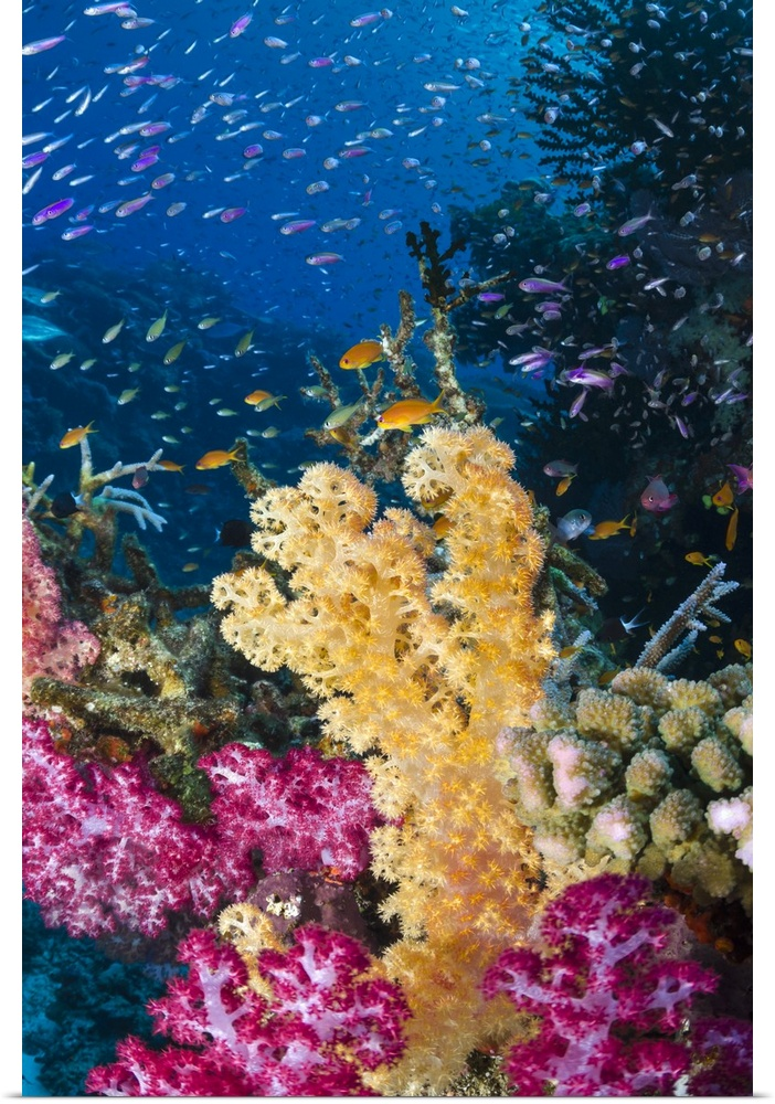 Poster Print Wall Art entitled Coral reef with shoals of tropical fish