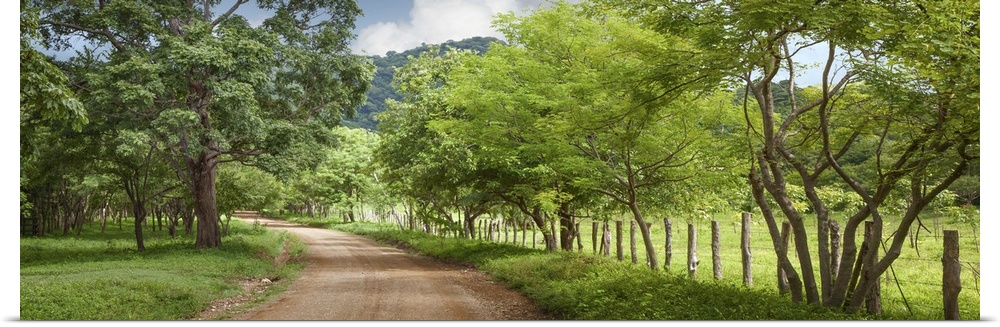 Poster Print Wall Art entitled Dirt Road in the Countryside