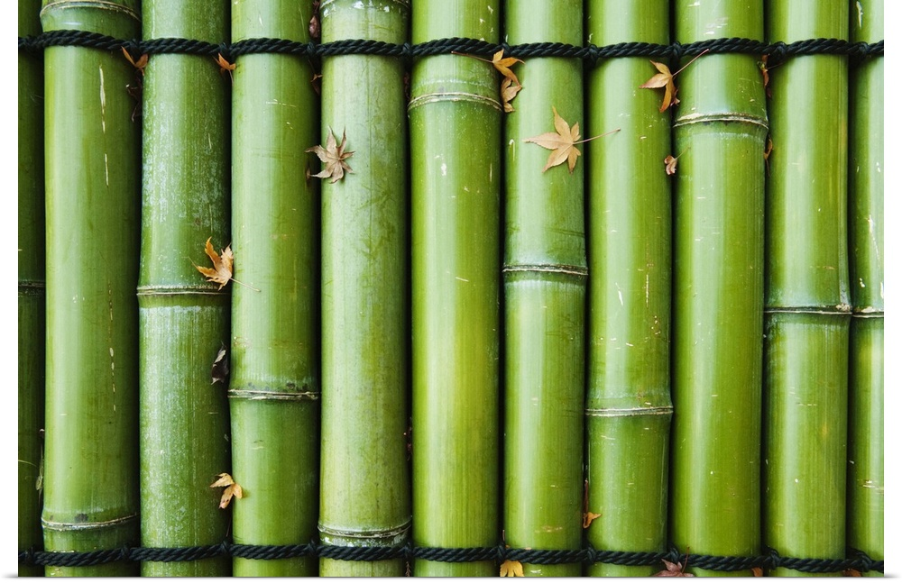 Poster Print Wall Art entitled verde Bamboo, Japan, Kyoto