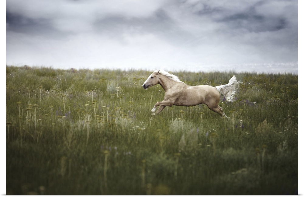 Poster Print Wall Art entitled Horse running in field with cloudy weather.