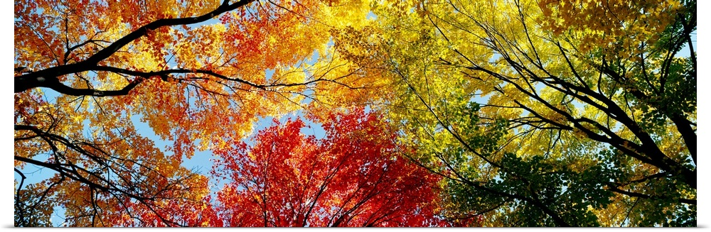 Poster Print Wall Art entitled Fall Foliage