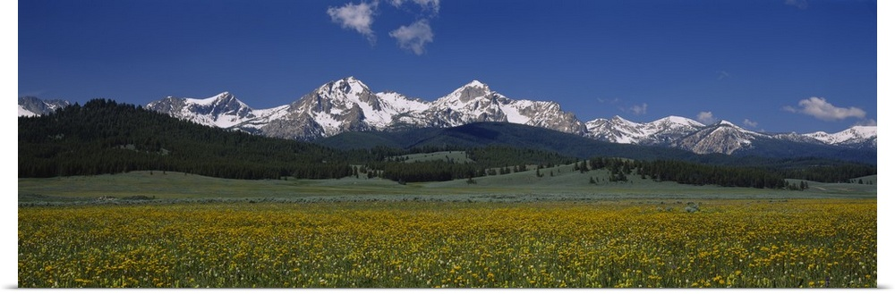 Poster Print Wall Art entitled Flowers in a field, Sawtooth National Recreation