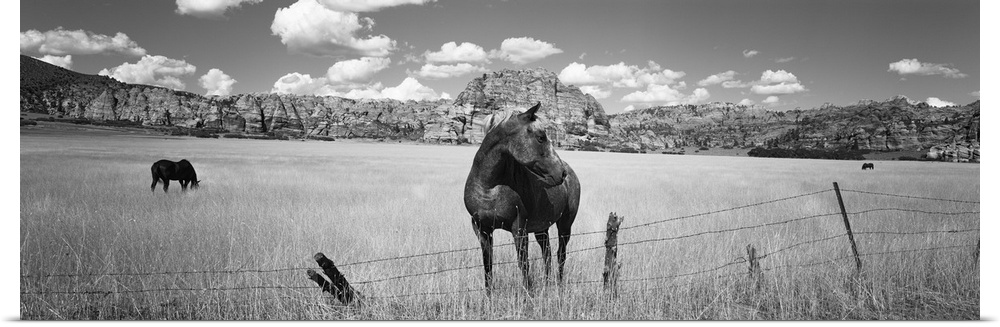 Poster Print Wall Art entitled Horses grazing in a meadow, Kolob Reservoir, Utah