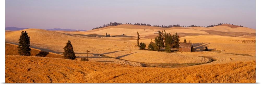 Poster Print Wall Art entitled Lentil Field Palouse Country Spokane County WA