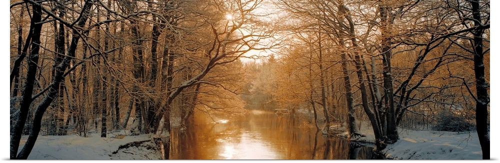 Poster Print Wall Art entitled River flowing through a forest