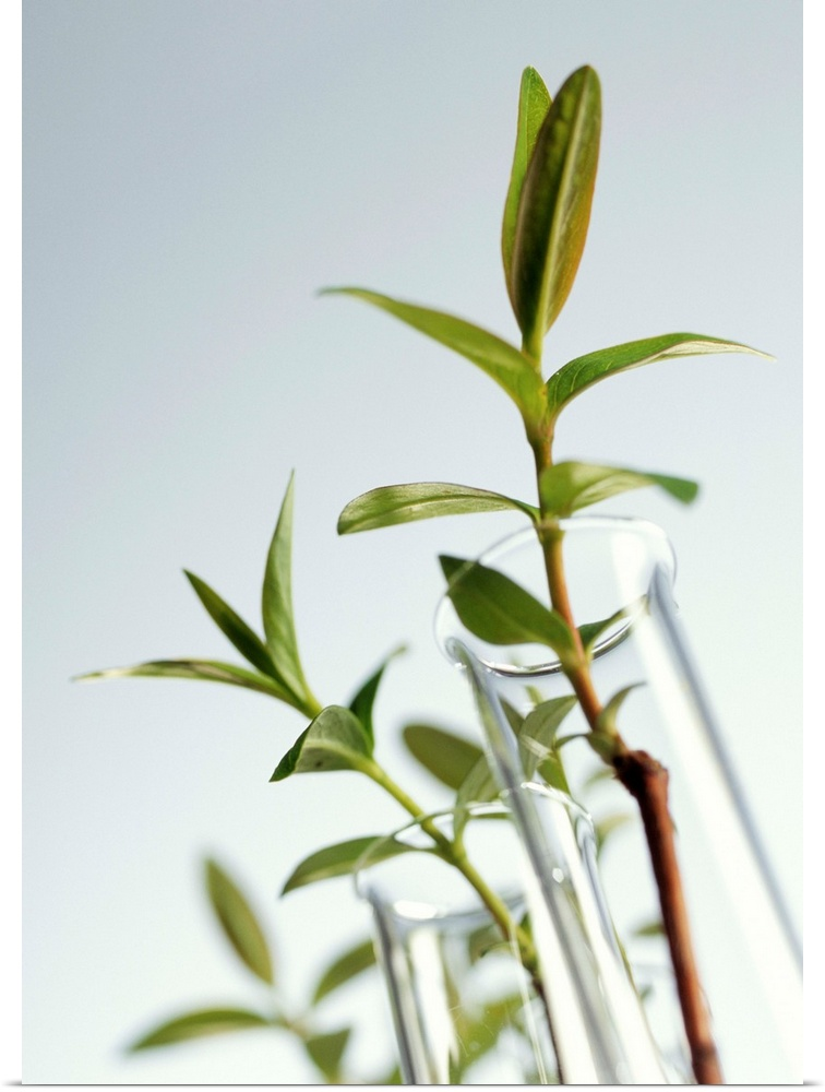 Poster Print Wall Art entitled Plant biotechnology