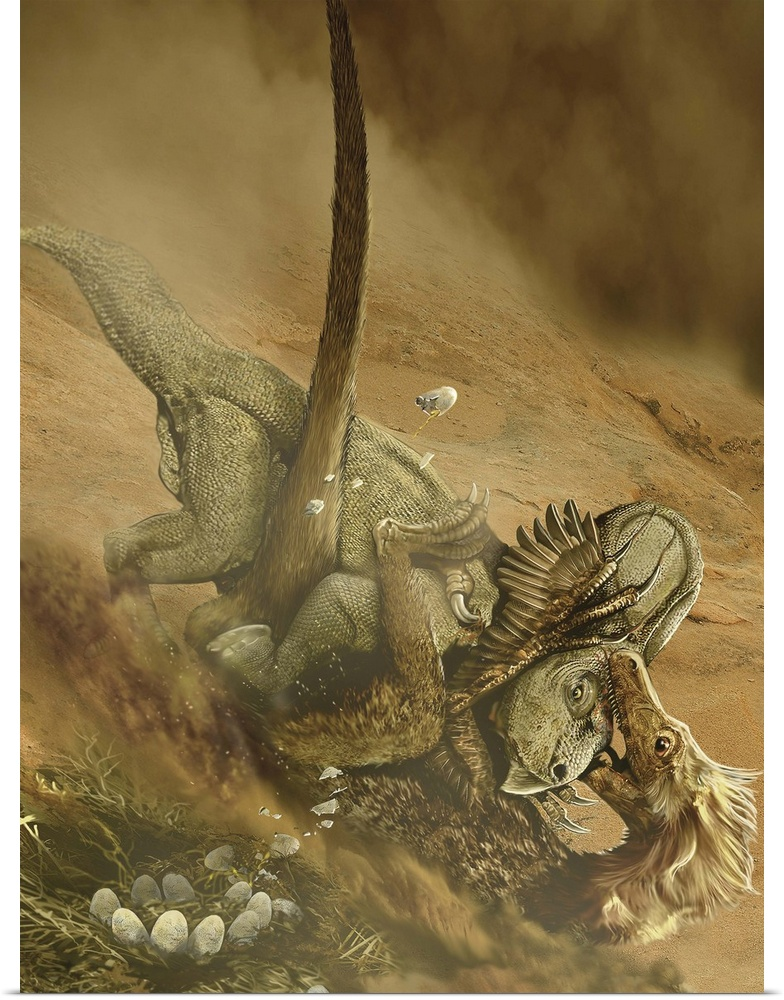 Poster Print Wall Art entitled Battle scene between a Velociraptor and