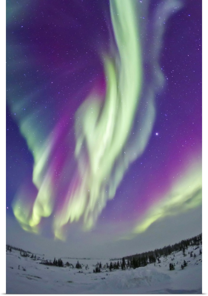 Poster-Print-Wall-Art-entitled-The-Northern-Lights-in-Churchill-Manitoba