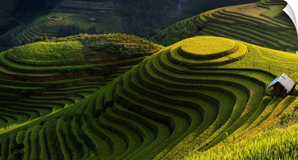 Wall Decal entitled oro rice terrace in mu cang chai, Vietnam