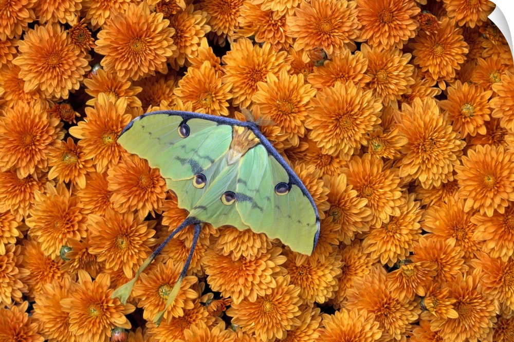wand abziehbild entitled Butterfly On blumen