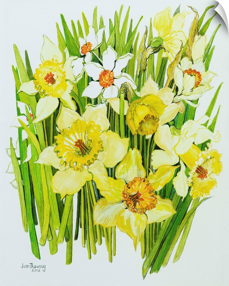 Wall Decal entitled Daffodils and narcissus