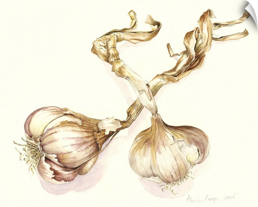 Wall Decal entitled Garlic bulbs, 2005