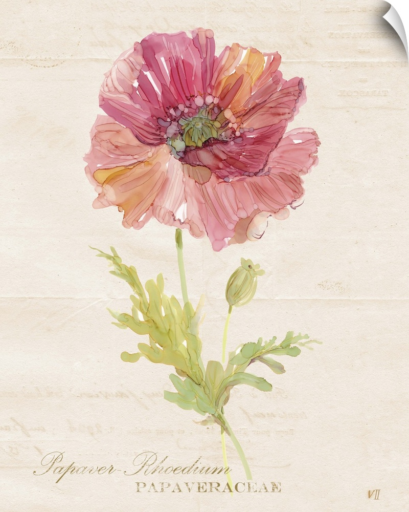 Wall Decal entitled Botanical Poppy