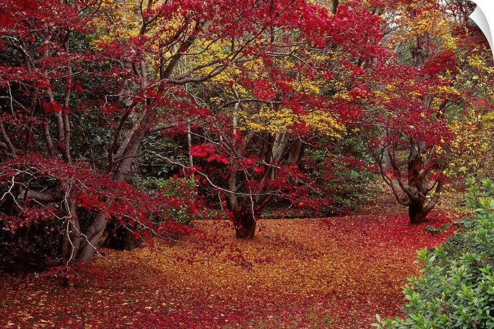 Wall Decal Entitled Carpet Of Autumn Leaves Under The