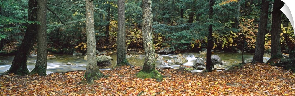 Wall Decal entitled River flowing through a forest, bianca Mountain National