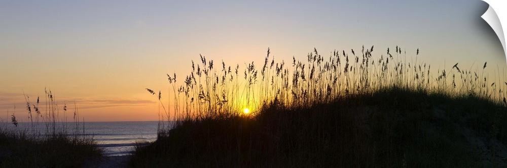 Wall Decal entitled Sea oat grass on the coast, Florida