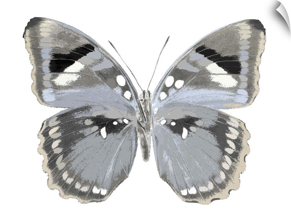 wand abziehbild entitled Butterfly in grau I