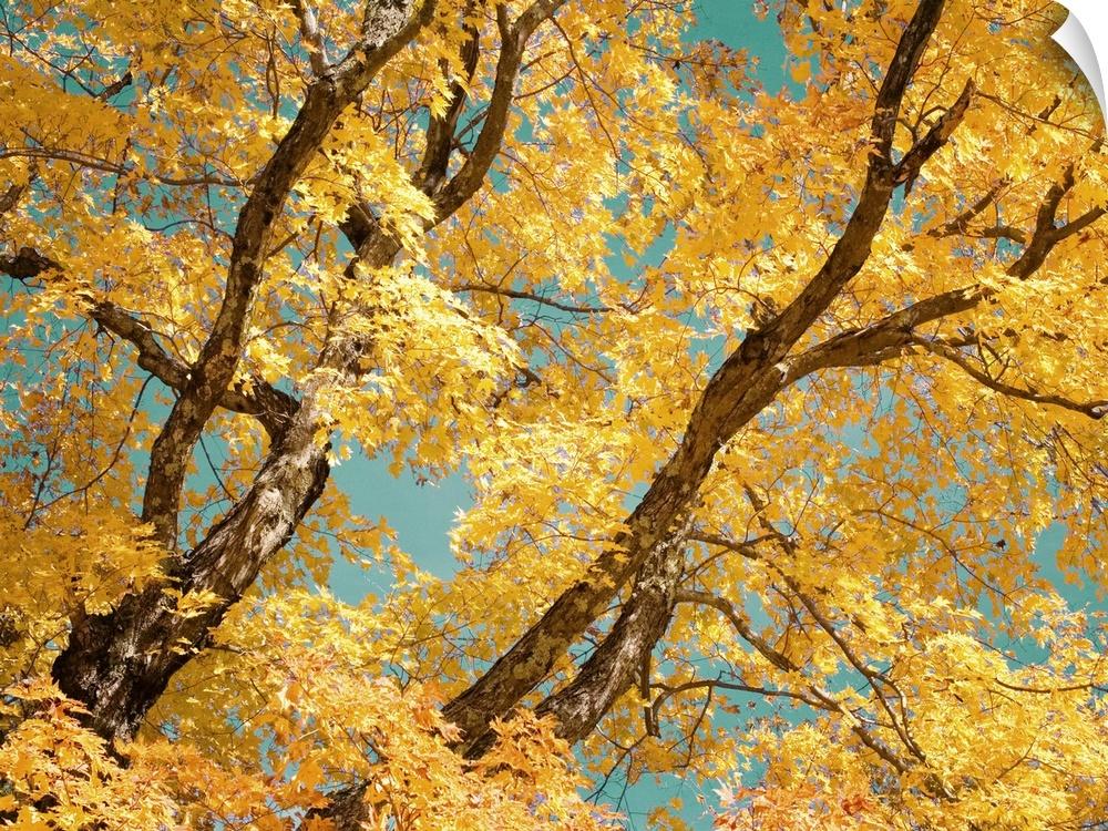 wand abziehbild entitled Autumn Tapestry V
