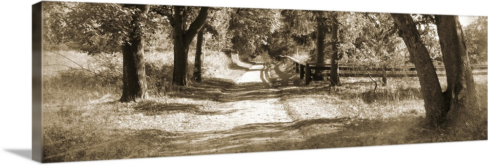 Large Solid-Faced Canvas Print Wall Art Print 48 x 16 entitled Dirt Sepia Road Solid-Faced Canvas Print entitled Dirt Sepia Road.  Sepia toned photograph of a dirt path vanishing into a row of trees casting afternoon shadows.  Multiple sizes available.  Primary colors within this image include White, Dark Forest Green.  Made in the USA.  All products come with a 365 day workmanship guarantee.  Inks used are latex-based and designed to last.  Featuring a proprietary design, our canvases produce the tightest corners without any bubbles, ripples, or bumps and will not warp or sag over time.  Canvas depth is 1.25 and includes a finished backing with pre-installed hanging hardware.