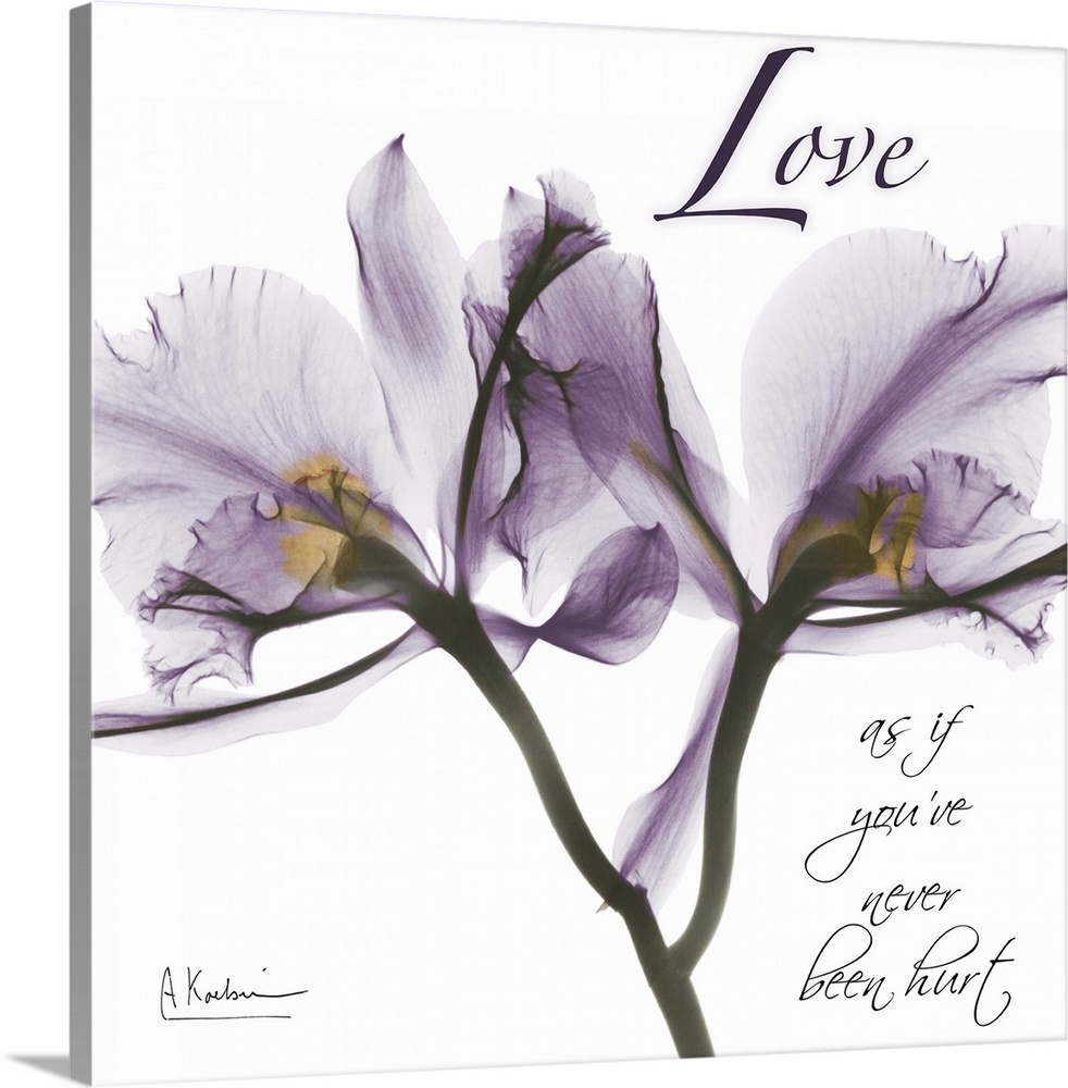 Large Solid-Faced Canvas Print Wall Art Print 20 x 20 entitled Orchid Love x-ray photography Solid-Faced Canvas Print entitled Orchid Love x-ray photography.  Multiple sizes available.  Primary colors within this image include Peach, White, Dark Forest Green.  Made in the USA.  All products come with a 365 day workmanship guarantee.  Archival-quality UV-resistant inks.  Canvas is handcrafted and made-to-order in the United States using high quality artist-grade canvas.  Canvas depth is 1.25 and includes a finished backing with pre-installed hanging hardware.