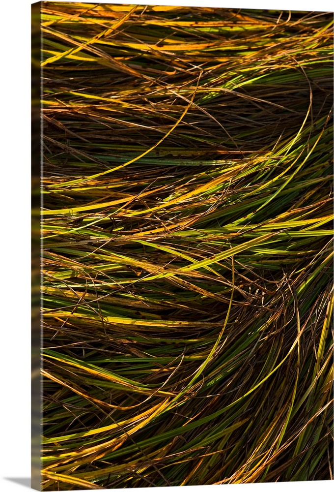 Large Solid-Faced Canvas Print Wall Art Print 20 x 30 entitled Abstract view of grass blowing in the wind Solid-Faced Canvas Print entitled Abstract view of grass blowing in the wind.  Multiple sizes available.  Primary colors within this image include Yellow, Brown, Peach, Black.  Made in the USA.  All products come with a 365 day workmanship guarantee.  Archival-quality UV-resistant inks.  Featuring a proprietary design, our canvases produce the tightest corners without any bubbles, ripples, or bumps and will not warp or sag over time.  Canvas is handcrafted and made-to-order in the United States using high quality artist-grade canvas.