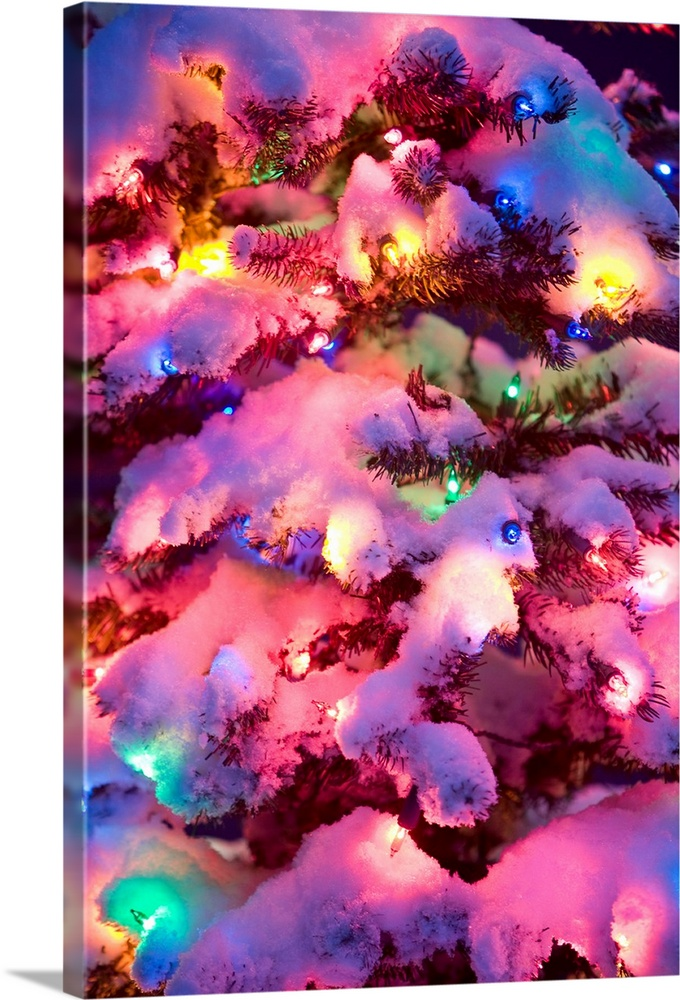 Large Solid-Faced Canvas Print Wall Art Print 20 x 30 entitled Close up of a multi colored Christmas tree lit at dusk outs... Solid-Faced Canvas Print entitled Close up of a multi colored Christmas tree lit at dusk outside in winter.  Multi-colored Christmas tree at dusk, dark background.  Multiple sizes available.  Primary colors within this image include Blue, Plum, Light Purple, White.  Made in USA.  Satisfaction guaranteed.  Archival-quality UV-resistant inks.  Canvas depth is 1.25 and includes a finished backing with pre-installed hanging hardware.  Archival inks prevent fading and preserve as much fine detail as possible with no over-saturation or color shifting.