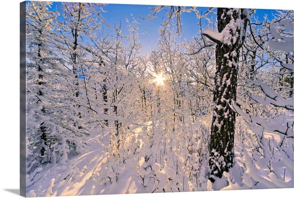 Large Solid-Faced Canvas Print Wall Art Print 30 x 20 entitled Detail of snow covered cotttonwoods during winter in Arctic... Solid-Faced Canvas Print entitled Detail of snow covered cotttonwoods during winter in Arctic Valley, Alaska.  Multiple sizes available.  Primary colors within this image include Light Gray, White, Royal Blue, Dark Navy Blue.  Made in USA.  All products come with a 365 day workmanship guarantee.  Inks used are latex-based and designed to last.  Canvas is handcrafted and made-to-order in the United States using high quality artist-grade canvas.  Archival inks prevent fading and preserve as much fine detail as possible with no over-saturation or color shifting.