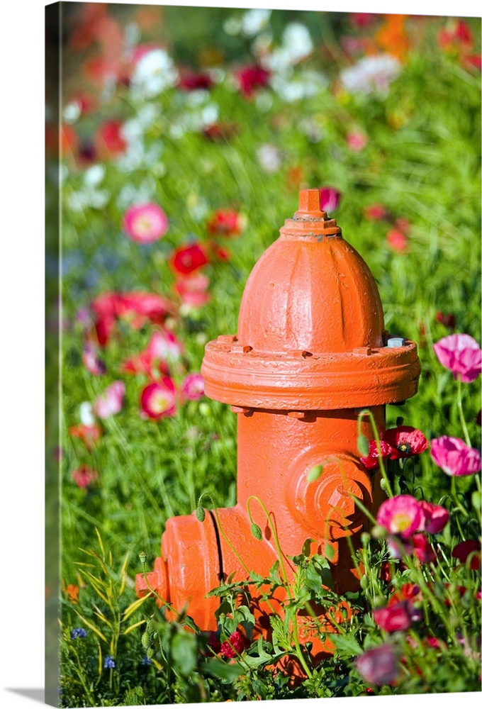 Large Solid-Faced Canvas Print Wall Art Print 20 x 30 entitled Fire hydrant and flowers Kodiak Island Southwest Alaska Solid-Faced Canvas Print entitled Fire hydrant and flowers Kodiak Island Southwest Alaska.  Fire hydrant and flowers, Kodiak Alaska.  Multiple sizes available.  Primary colors within this image include Red, Brown, Dark Yellow, Pink.  Made in USA.  All products come with a 365 day workmanship guarantee.  Archival-quality UV-resistant inks.  Archival inks prevent fading and preserve as much fine detail as possible with no over-saturation or color shifting.  Canvas depth is 1.25 and includes a finished backing with pre-installed hanging hardware.