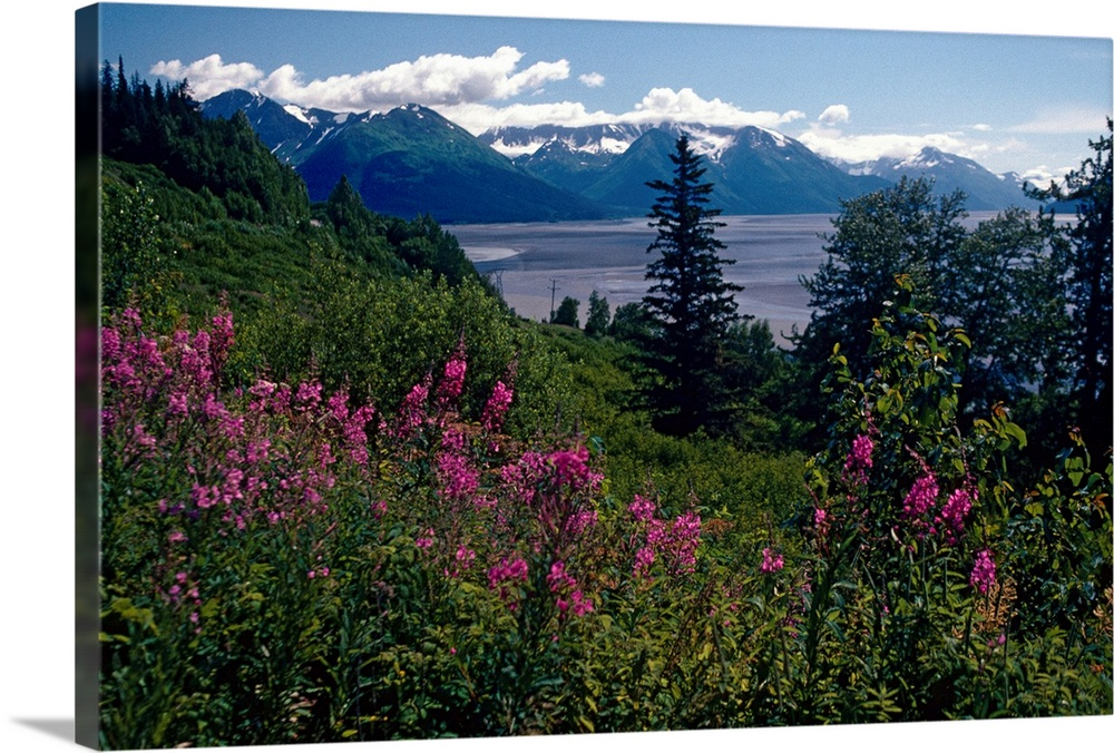 Large Solid-Faced Canvas Print Wall Art Print 30 x 20 entitled Fireweed and Chugach Mts Turnagain Arm SC Alaska Solid-Faced Canvas Print entitled Fireweed and Chugach Mts Turnagain Arm SC Alaska.  Multiple sizes available.  Primary colors within this image include Dark Blue, Sky Blue, Black, Dark Forest Green.  Made in USA.  All products come with a 365 day workmanship guarantee.  Inks used are latex-based and designed to last.  Featuring a proprietary design, our canvases produce the tightest corners without any bubbles, ripples, or bumps and will not warp or sag over time.  Archival inks prevent fading and preserve as much fine detail as possible with no over-saturation or color shifting.