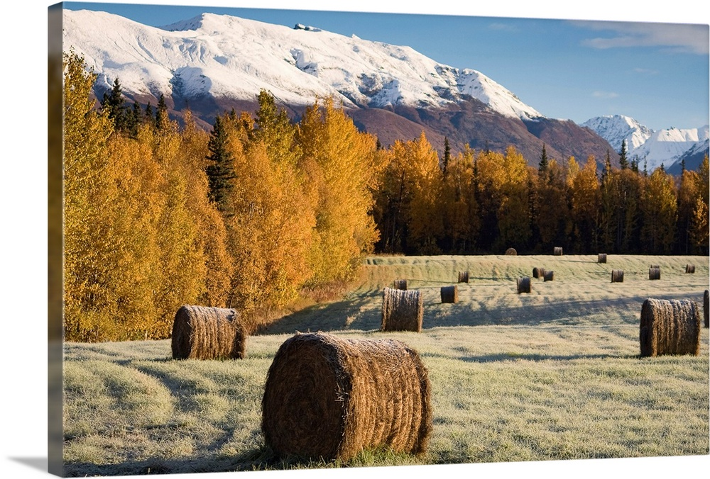 Large Solid-Faced Canvas Print Wall Art Print 30 x 20 entitled Frost clings to bails of hay in a field near Palmer, Alaska... Solid-Faced Canvas Print entitled Frost clings to bails of hay in a field near Palmer, Alaska on an early Autumn morning.  Multiple sizes available.  Primary colors within this image include Brown, Black, White, Gray Blue.  Made in the USA.  Satisfaction guaranteed.  Archival-quality UV-resistant inks.  Featuring a proprietary design, our canvases produce the tightest corners without any bubbles, ripples, or bumps and will not warp or sag over time.  Canvas is handcrafted and made-to-order in the United States using high quality artist-grade canvas.