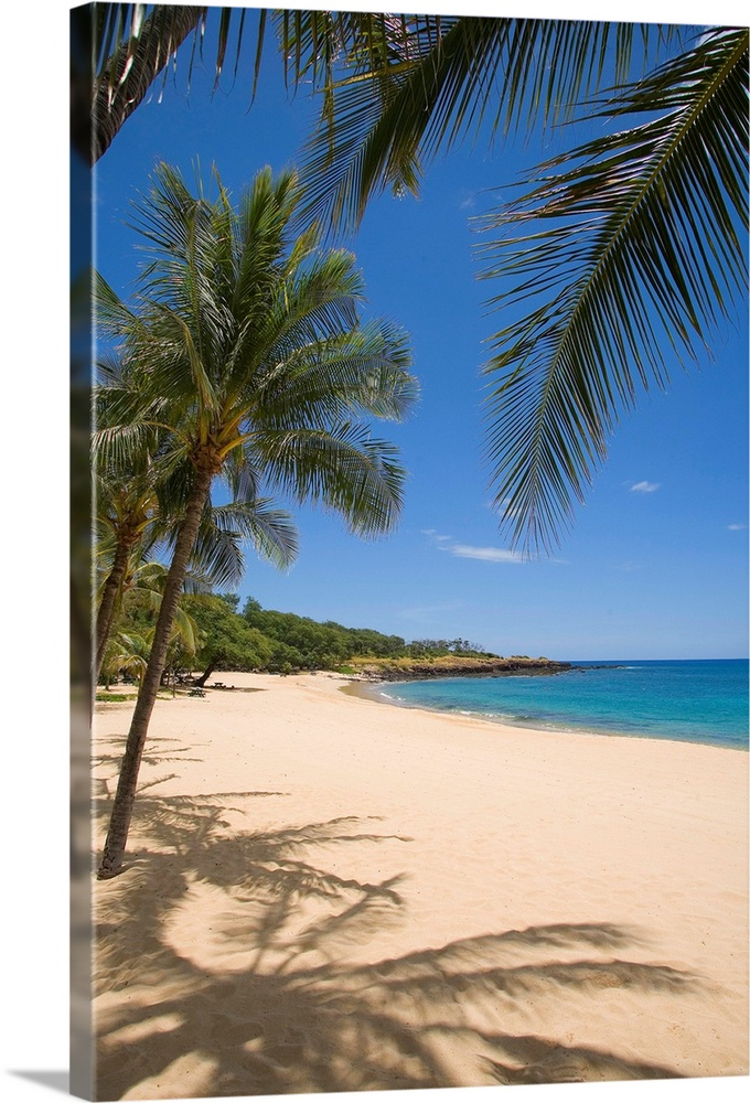 Large Solid-Faced Canvas Print Wall Art Print 20 x 30 entitled Hawaii, Lanai, Hulopoe Beach, Palm Trees And Shadows Along ... Solid-Faced Canvas Print entitled Hawaii, Lanai, Hulopoe Beach, Palm Trees And Shadows Along Sandy Beach.  Multiple sizes available.  Primary colors within this image include Sky Blue, White, Dark Forest Green, Dark Navy Blue.  Made in USA.  All products come with a 365 day workmanship guarantee.  Inks used are latex-based and designed to last.  Featuring a proprietary design, our canvases produce the tightest corners without any bubbles, ripples, or bumps and will not warp or sag over time.  Archival inks prevent fading and preserve as much fine detail as possible with no over-saturation or color shifting.
