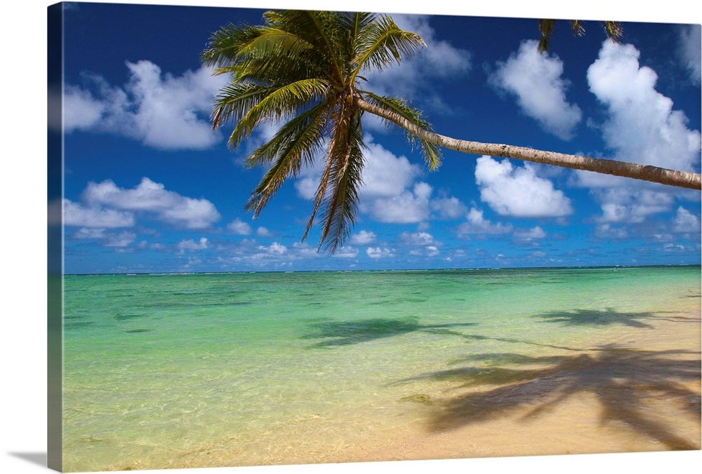 Large Solid-Faced Canvas Print Wall Art Print 30 x 20 entitled Lone Palm Tree Leaning Over Beach With Shadow Solid-Faced Canvas Print entitled Lone Palm Tree Leaning Over Beach With Shadow.  Multiple sizes available.  Primary colors within this image include Silver, Dark Forest Green, Pale Blue, Royal Blue.  Made in USA.  Satisfaction guaranteed.  Archival-quality UV-resistant inks.  Canvas depth is 1.25 and includes a finished backing with pre-installed hanging hardware.  Archival inks prevent fading and preserve as much fine detail as possible with no over-saturation or color shifting.