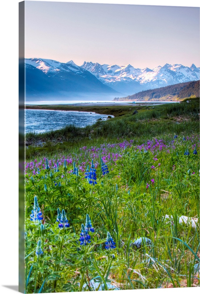 Large Solid-Faced Canvas Print Wall Art Print 20 x 30 entitled Lupines just outside of Haines, Alaska Solid-Faced Canvas Print entitled Lupines just outside of Haines, Alaska.  Multiple sizes available.  Primary colors within this image include Forest Green, Sky Blue, Lilac, Royal Blue.  Made in the USA.  Satisfaction guaranteed.  Archival-quality UV-resistant inks.  Featuring a proprietary design, our canvases produce the tightest corners without any bubbles, ripples, or bumps and will not warp or sag over time.  Canvas is handcrafted and made-to-order in the United States using high quality artist-grade canvas.