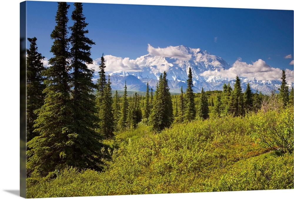 Large Solid-Faced Canvas Print Wall Art Print 30 x 20 entitled Mt McKinley and the Alaska Range as seen from inside Denali... Solid-Faced Canvas Print entitled Mt McKinley and the Alaska Range as seen from inside Denali National Park Alaska summer.  Mt. Mckinley and Alaska Range as seen from inside Denali National Park, Alaska.  Multiple sizes available.  Primary colors within this image include Dark Yellow, Black, Silver, Royal Blue.  Made in USA.  All products come with a 365 day workmanship guarantee.  Inks used are latex-based and designed to last.  Canvas depth is 1.25 and includes a finished backing with pre-installed hanging hardware.  Featuring a proprietary design, our canvases produce the tightest corners without any bubbles, ripples, or bumps and will not warp or sag over time.