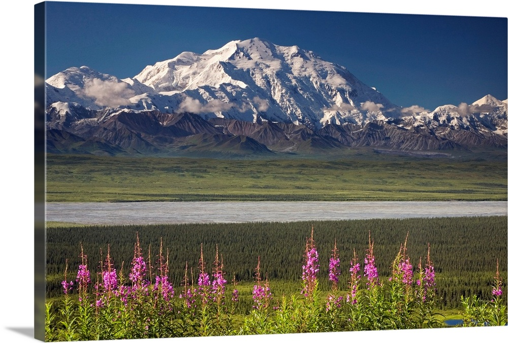 Large Solid-Faced Canvas Print Wall Art Print 30 x 20 entitled Mt. McKinley and the Alaska Range with fireweed flowers, De... Solid-Faced Canvas Print entitled Mt. McKinley and the Alaska Range with fireweed flowers, Denali National Park Alaska.  Mt. Mckinley and the Alaska Range dominate the background of this shot taken inside Denali National Park, Alaska AK. Wildflowers in bloom, a calm river, and rolling fields occupy the forefront.  Multiple sizes available.  Primary colors within this image include Dark Yellow, Pink, Muted Blue, Dark Forest Green.  Made in USA.  All products come with a 365 day workmanship guarantee.  Inks used are latex-based and designed to last.  Archival inks prevent fading and preserve as much fine detail as possible with no over-saturation or color shifting.  Canvas depth is 1.25 and includes a finished backing with pre-installed hanging hardware.