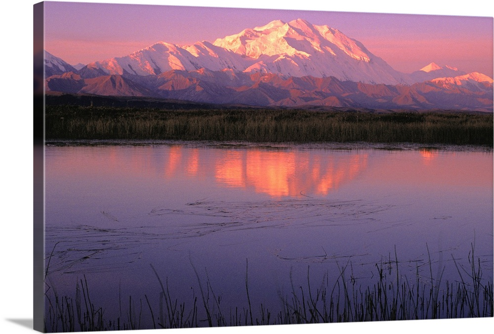 Large Solid-Faced Canvas Print Wall Art Print 30 x 20 entitled Mt McKinley Relfected in Tundra Pond Denali NP AK Solid-Faced Canvas Print entitled Mt McKinley Relfected in Tundra Pond Denali NP AK.  Multiple sizes available.  Primary colors within this image include Peach, Lilac, Muted Blue.  Made in USA.  All products come with a 365 day workmanship guarantee.  Inks used are latex-based and designed to last.  Archival inks prevent fading and preserve as much fine detail as possible with no over-saturation or color shifting.  Canvas is handcrafted and made-to-order in the United States using high quality artist-grade canvas.