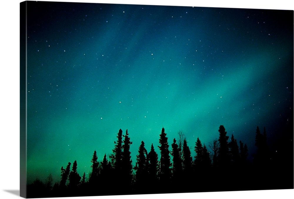 Large Solid-Faced Canvas Print Wall Art Print 30 x 20 entitled Northern Lights over Black Spruce forest during Winter in S... Solid-Faced Canvas Print entitled Northern Lights over Black Spruce forest during Winter in Southcentral Alaska.  Landscape photograph on a giant canvas of the Aurora Borealis over the Black Spruce forest, near Trapper Creek, during winter in Southcentral Alaska.  Multiple sizes available.  Primary colors within this image include Teal, Dark Navy Blue.  Made in USA.  Satisfaction guaranteed.  Archival-quality UV-resistant inks.  Canvas is handcrafted and made-to-order in the United States using high quality artist-grade canvas.  Canvas depth is 1.25 and includes a finished backing with pre-installed hanging hardware.
