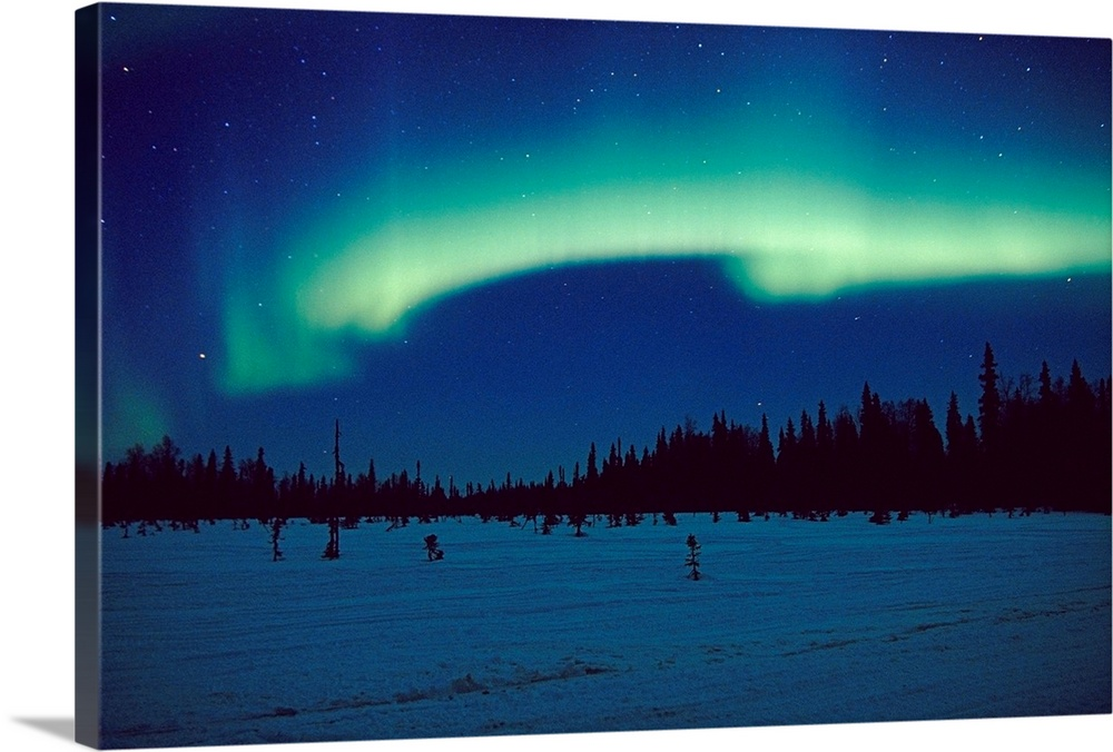 Large Solid-Faced Canvas Print Wall Art Print 30 x 20 entitled Northern Lights over Black Spruce forest during Winter in S... Solid-Faced Canvas Print entitled Northern Lights over Black Spruce forest during Winter in Southcentral Alaska.  Aurora over spruce forest near Trapper Creek. Winter in Southcentral Alaska.  Multiple sizes available.  Primary colors within this image include Light Green, Black, Muted Blue, Teal.  Made in the USA.  All products come with a 365 day workmanship guarantee.  Archival-quality UV-resistant inks.  Canvas depth is 1.25 and includes a finished backing with pre-installed hanging hardware.  Canvas is handcrafted and made-to-order in the United States using high quality artist-grade canvas.